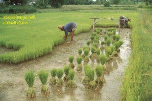नानाजी देशमुख कृषि संजीवनी योजना
