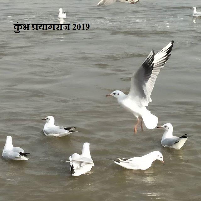 कुंभ प्रयागराज 2019